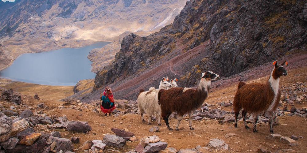 Woman with Lamas